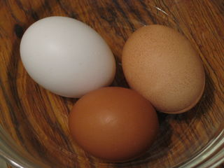 Eggs05-10.19.08
