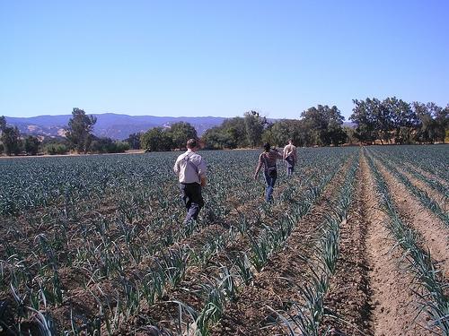 Organic Farm14