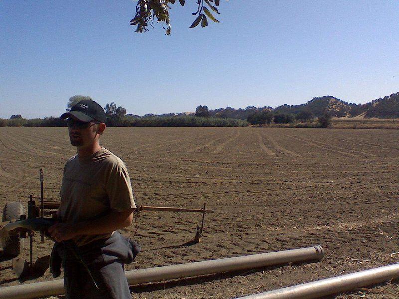 Capay Organics Onion field