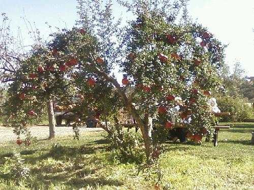 Organic Farm20