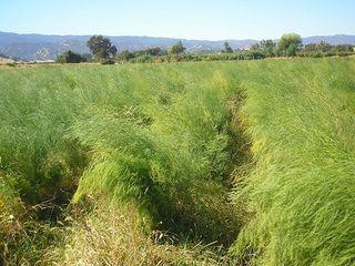 Organic Farm9