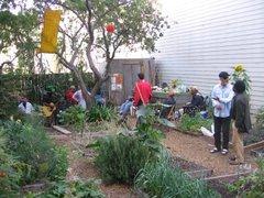 Community_garden_033